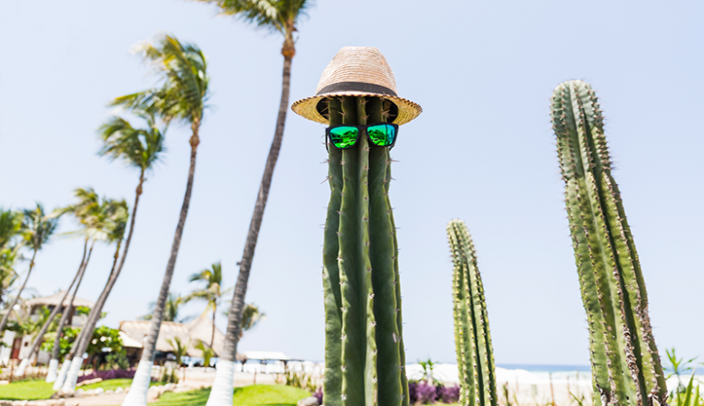 Cactus with a hat and sunglasses